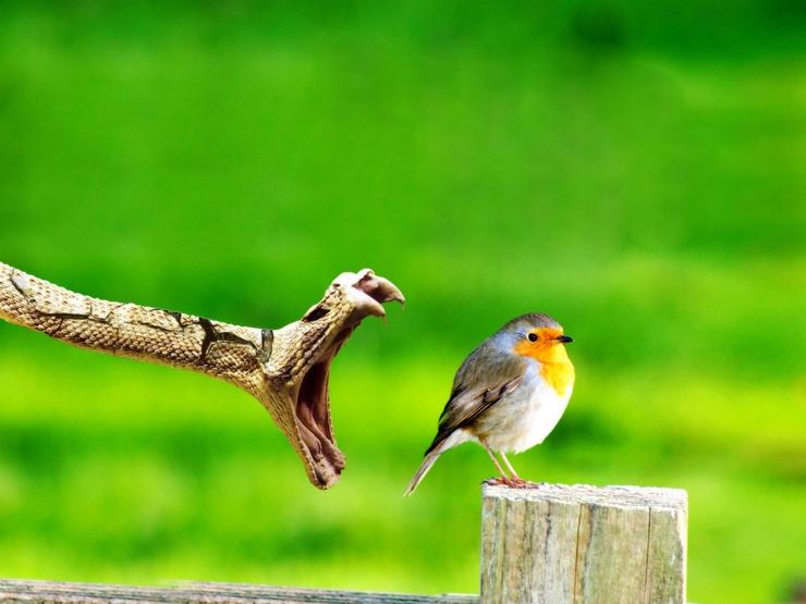 Змея и птичка
